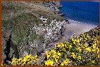 Colourful Gorse & Elephant Rock